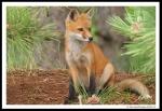 fox 02