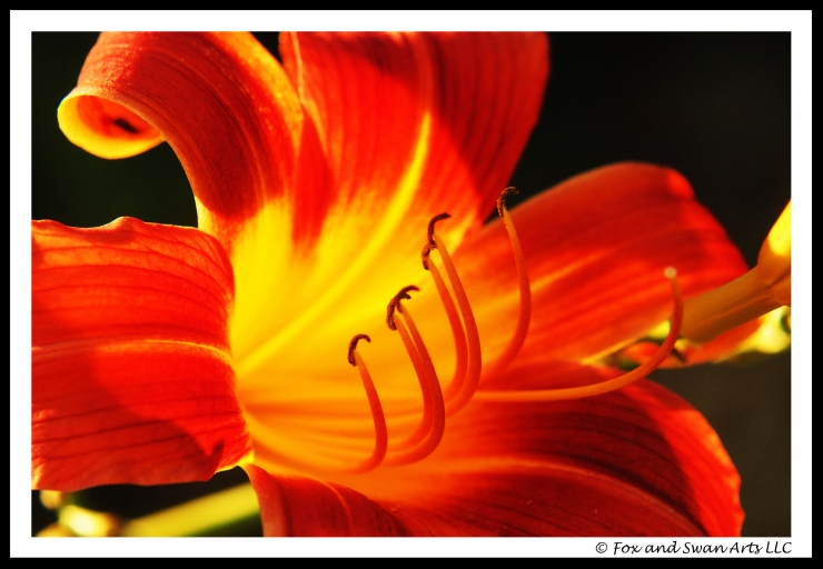 lily 02