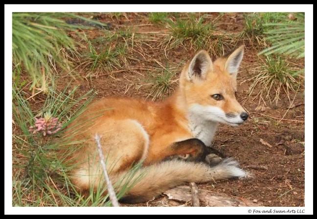 fox 03