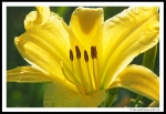 lily 04