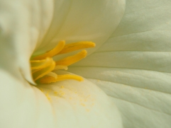 kinstone wildflower