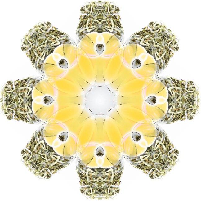 white peony mandala