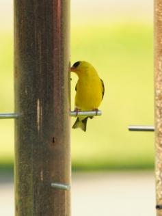 One Finch