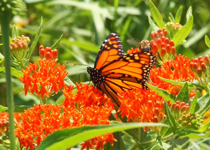 Immediately Upon His Reincarnation as a Monarch, Neruda Began Romancing the Wildflowers