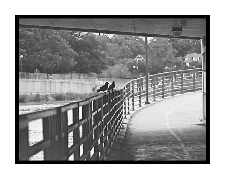 PigeonsB300dpi24x30